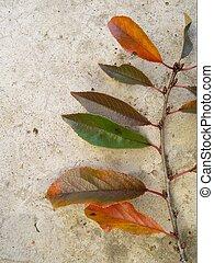 automne, leaves., cerise, coloré, branche, arbre