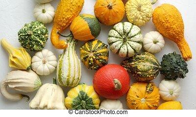 automne, mini, arrière-plan., coloré, blanc, vue, sommet, fond, plat, lay., potirons, divers, genres
