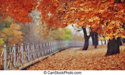 automne, parc, beau, ville