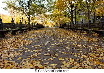 automne, parc, central, york, nouveau