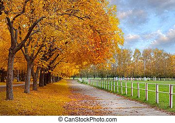 automne, parc