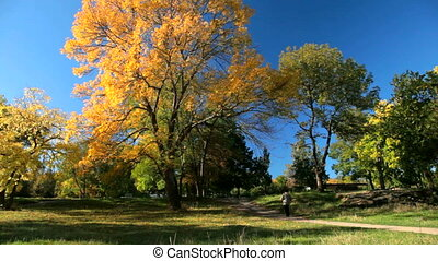 automne, parc, promenade