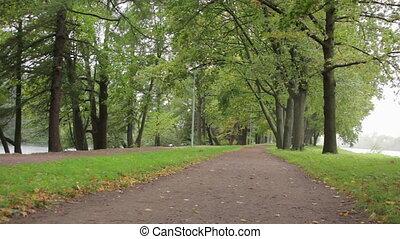 automne, parc, vent