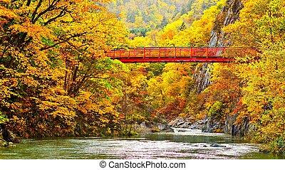 automne, passerelle, rivière, travers