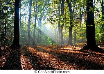 automne, rayons soleil, forêt, verser