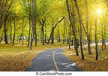 automne, rayons soleil, parc