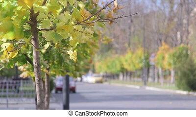 automne, rue ville, calme