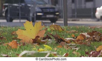 automne, rue ville, voitures