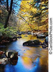 automne, ruisseau, feuillage