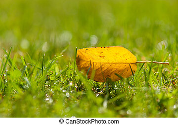automne, solitaire, feuille, jaune