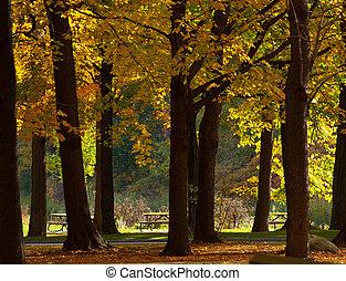 automne, toile de fond