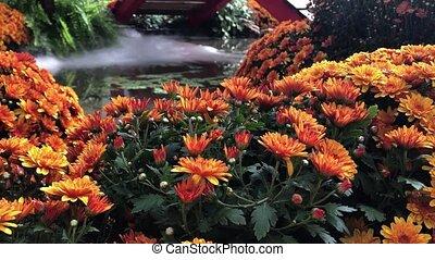 automne, usines, composition, fleurs