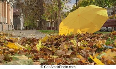 automne, ville, couleurs