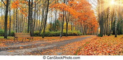 automne, ville, feuilles, parc, tomber
