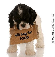 autour de, nourriture, mendiant, -, chien, signe, épagneul, américain, cocker, chiot, cou