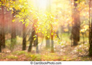 autumn., automne