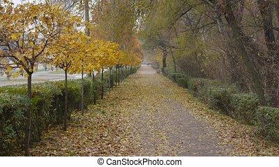 autumn., ville parc, ruelle
