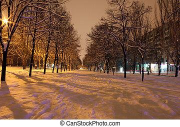 avenue, nuit
