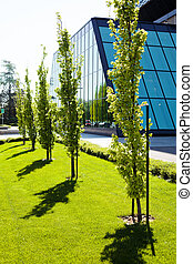 avenue, parc, arbres