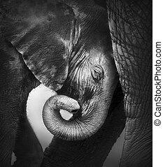 bébé, confort, éléphant, chercher