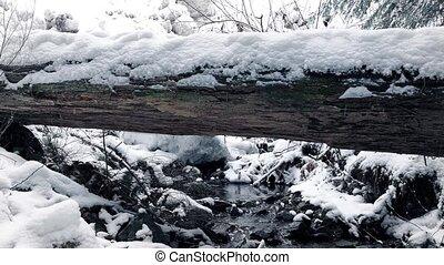 bûche, ruisseau, neigeux, sur, passé, en mouvement