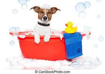baignoire, coloré, prendre, chien, bain, canard, plastique
