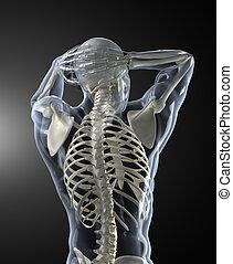balayage corps, monde médical, dos, humain, vue