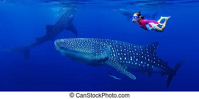 baleine, girl, snorkeling, requin