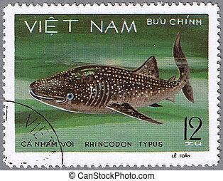 baleine, -, requin, typus, rhincodon