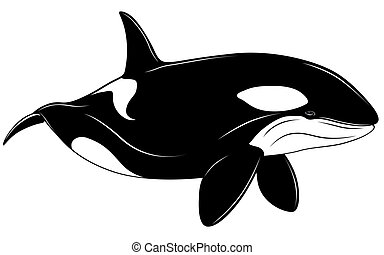 baleine, tueur