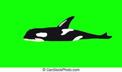 baleine, tueur, isolé, écran, eau verte