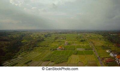 bali, champs, océan, indien, riz, île, 6