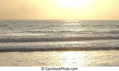 bali, indonésie, vague, attente, océan coucher soleil, surfeur