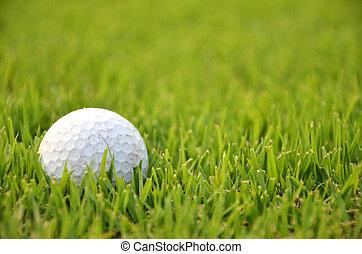 balle golf, herbe, sale