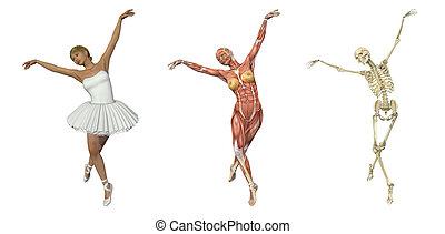 ballet, overlays, -, anatomique