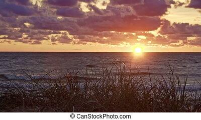 baltique, herbe, coucher soleil, mer