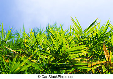 bambou, feuille