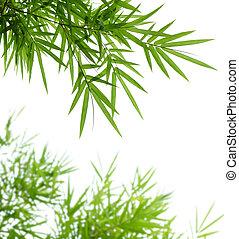 bambou, feuilles