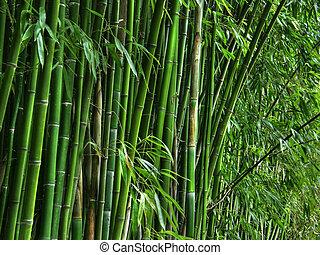 bambou, grove.