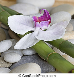 bambou, orchidée