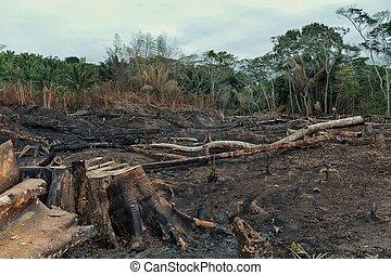 bas, brûlé, champs, enregistrement, étendu, déboisement, résultat, rainforest