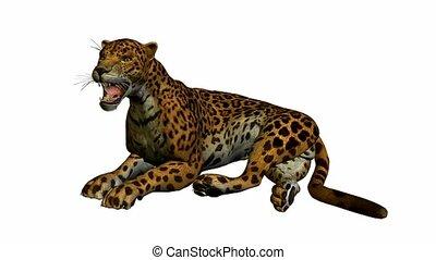 bas, jaguar, mensonge