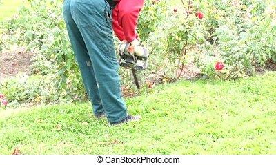 bas, jardin, automne, découpage, roses., travaux