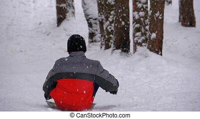 bas, lent, neigeux, pin, forest., colline, enfant, mouvement, sledding