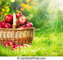 basket., organique, orchard., jardin, pommes