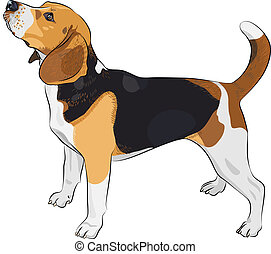 beagle, race, vecteur, croquis, chien