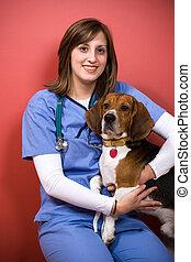 beagle, vétérinaire
