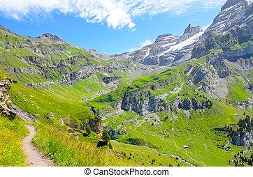 beau, été, entouré, season., randonnée, paysage., summer., secteur, montagnes vertes, kandersteg, suisse, rochers, alpes, suisse, sentier, alpin, pastures., paysage, photographié