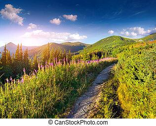 beau, été, montagnes, flowers., rose, paysage