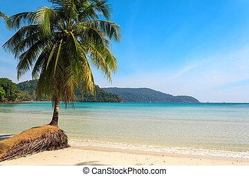 beau, île, arbre, exotique, plage paume